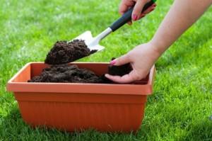пищевые отходы в огородничестве